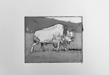 Bison Bison, Aquatint,